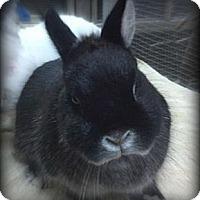 Adopt A Pet :: Gus - Williston, FL