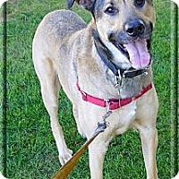 Adopt A Pet :: I'm a guys best buddy - Sacramento, CA