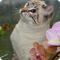 Adopt A Pet :: Sammie - Davis, CA