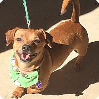 Adopt A Pet :: Tex - Wimberley, TX