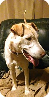 Husky/Shar Pei Mix Dog for adoption in Allentown, Pennsylvania - Zoey