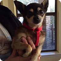 Adopt A Pet :: Cubby Bear SENIOR - Mobile, AL
