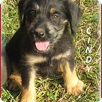 Adopt A Pet :: Cindy ADOPTION PENDING - Marlborough, MA