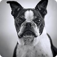 Adopt A Pet :: IRIS - Weatherford, TX