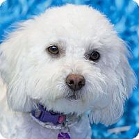 Adopt A Pet :: Cola - San Diego, CA