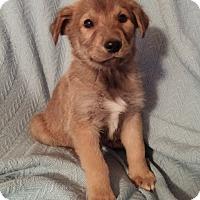 Adopt A Pet :: Petey - Hillsboro, IL