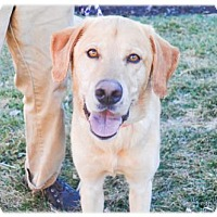 Adopt A Pet :: Osage - Broomfield, CO