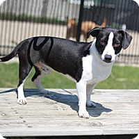 Adopt A Pet :: Goofy - South Haven, MI