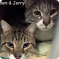 Adopt A Pet :: BEN - Cliffside Park, NJ