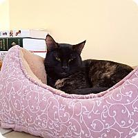 Adopt A Pet :: Thin Mints - Salisbury, MA