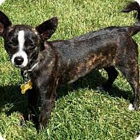 Adopt A Pet :: William - Salt Lake City, UT