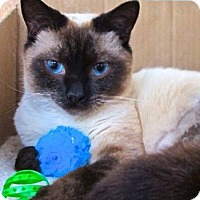 Adopt A Pet :: Quattro - Davis, CA