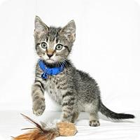 Adopt A Pet :: Sebastian - Lufkin, TX