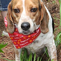 Adopt A Pet :: Buddy - Vass, NC