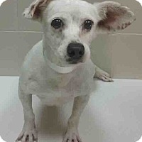 Adopt A Pet :: ADOPTED!!!   Chele - Channahon, IL