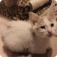 Adopt A Pet :: Albert - East Hanover, NJ