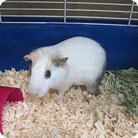 Adopt A Pet :: *Urgent* Emily - Fullerton, CA