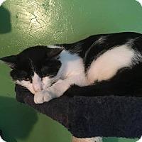 Adopt A Pet :: Glidden - Putnam, CT