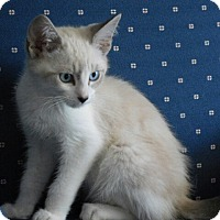 Adopt A Pet :: Wallace - Davis, CA
