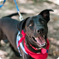 Adopt A Pet :: Dennis - Huntsville, AL