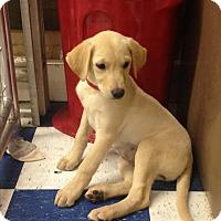 Adopt A Pet :: Kenzie - Redding, CA