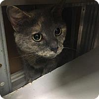 Adopt A Pet :: Lilac - Leonardtown, MD