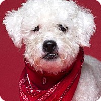 Adopt A Pet :: SAMARA - Pt. Richmond, CA