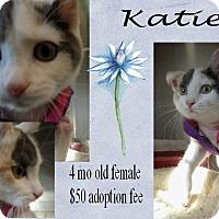 Adopt A Pet :: Katie - Jefferson City, TN