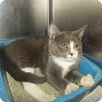 Adopt A Pet :: *DOC - Upper Marlboro, MD