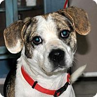 Adopt A Pet :: Torino - DuQuoin, IL