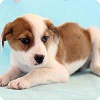 Adopt A Pet :: Udel - Waldorf, MD