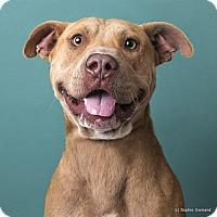 Adopt A Pet :: Junior - Anniston, AL