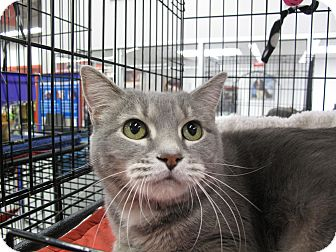 Domestic Shorthair Cat for adoption in Port Republic, Maryland - Leanne