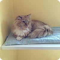 Adopt A Pet :: Crumple - Lancaster, MA