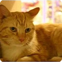 Adopt A Pet :: Reds - Jenkintown, PA