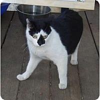 Adopt A Pet :: Bobo - New Egypt, NJ