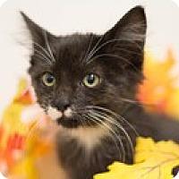 Adopt A Pet :: CK - Sacramento, CA