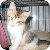 Adopt A Pet :: Lucy - Shelton, WA