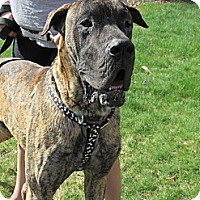Adopt A Pet :: Bane - Manassas, VA