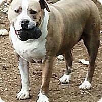 Adopt A Pet :: Rinn - Battle Creek, MI