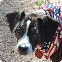 Adopt A Pet :: Stella B - Phoenix, AZ