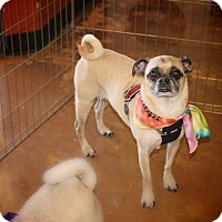 Adopt A Pet :: Jake - Austin, TX