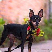 Adopt A Pet :: Roxy - Baton Rouge, LA