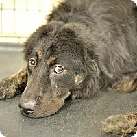 Adopt A Pet :: Kelton - Gainesville, FL