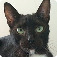 Adopt A Pet :: Bandit - Winchester, CA