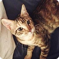 Adopt A Pet :: Praddah - North Highlands, CA