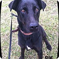Adopt A Pet :: Star - Lincolnton, NC