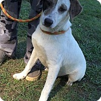 Adopt A Pet :: Patches - Dumfries, VA