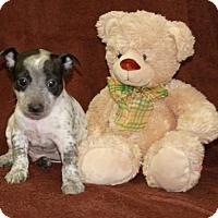 Adopt A Pet :: Hall Closet - Salem, NH