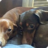 Adopt A Pet :: Annie and Pearl - Georgetown, KY